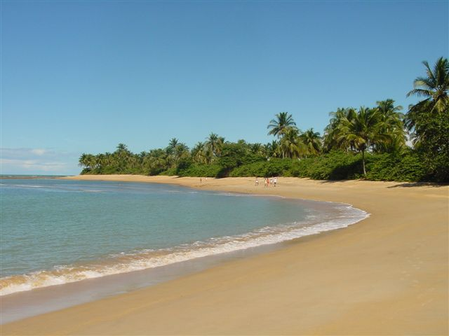 Wide shot of sunny sandy beach with palm trees